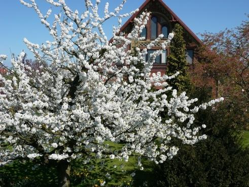 spring blossom nature