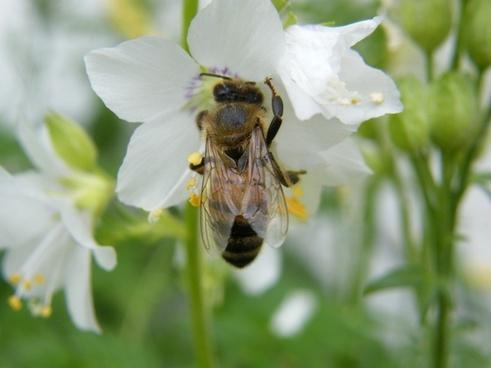 spring flower bee
