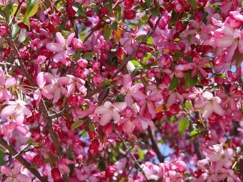 spring flower spring flowers