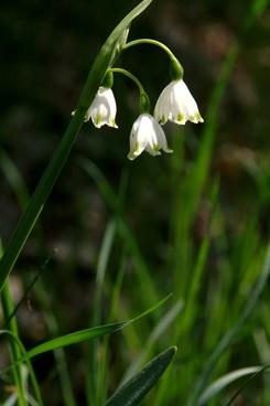 spring flower white flower