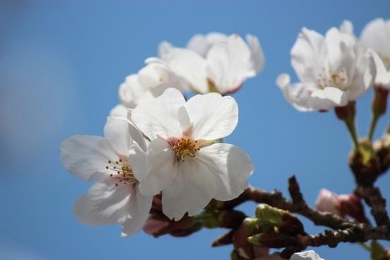 spring flowers spring flowers