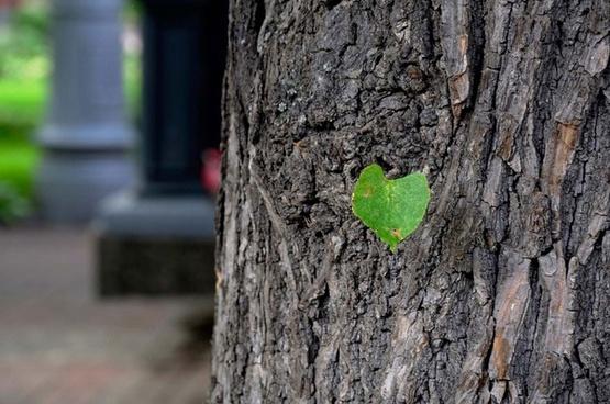 spring green leaf on tree bark