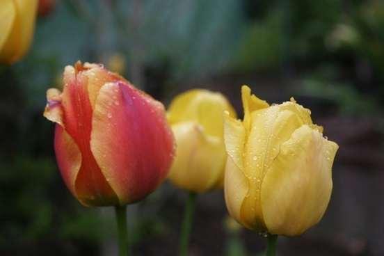 spring public record floral