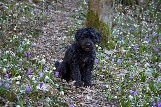 spring roses dog