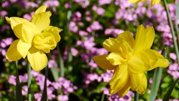 spring spring flowers sunshine