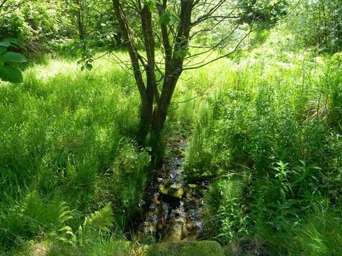 spring stream watergrove