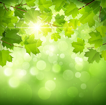 spring sunlight with green leaves background vector