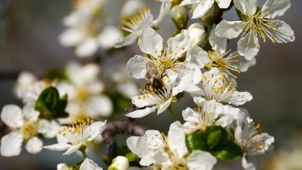 spring sunshine bees
