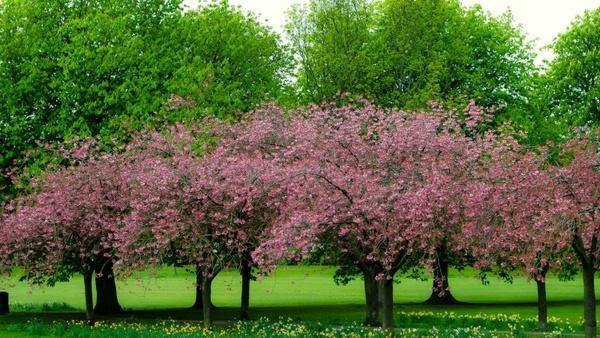 spring tree branch