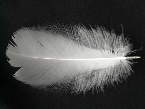 spring white filigree