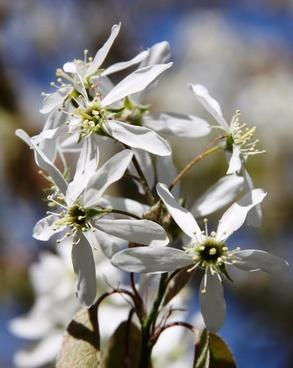spring white flowers