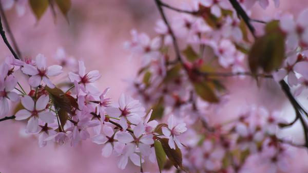 springtime memories