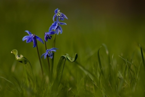 springtime spring flower