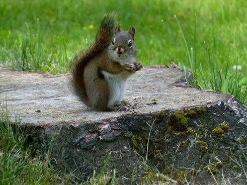 squirrel eating animal