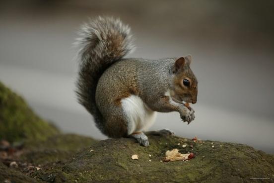 squirrel nut tree
