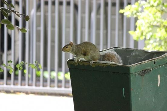 squirrel on a bin