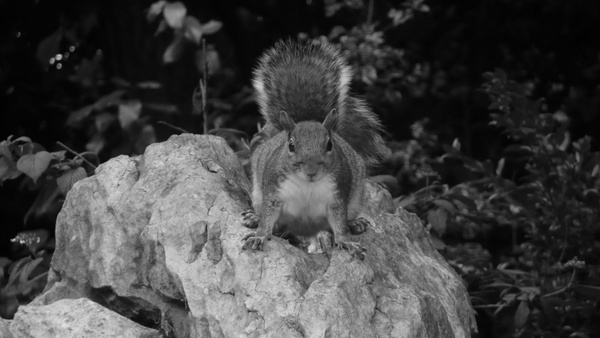 squirrel on the stone
