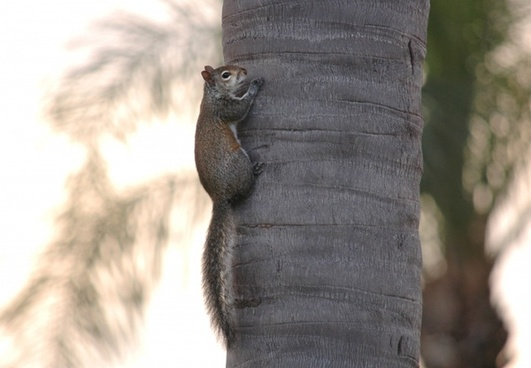 squirrel on trunk