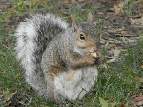squirrel park peanut