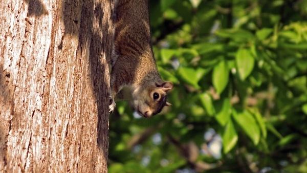 squirrel park squirrels