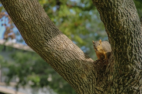 squirrel sitting on tree branch