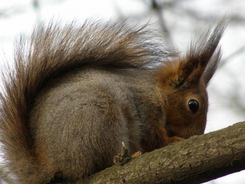 squirrel tree spring
