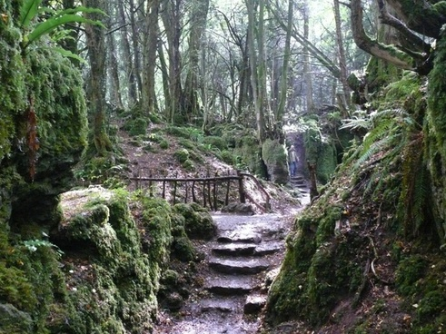 stairs forest mystical