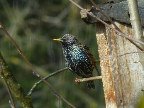 star bird animal