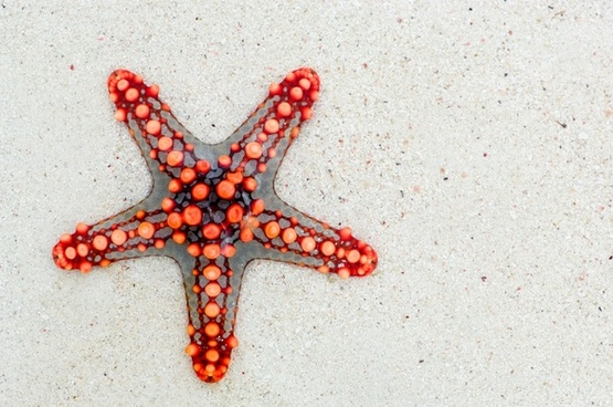 starfish sea africa