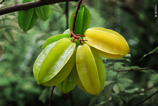 starfruit star fruit carambola