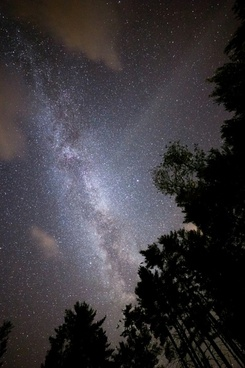 stars night sky milky way trees
