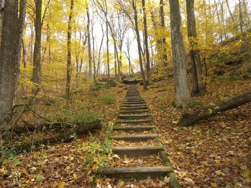 steps on the hiking trail in govenor dodge state park wisconsin