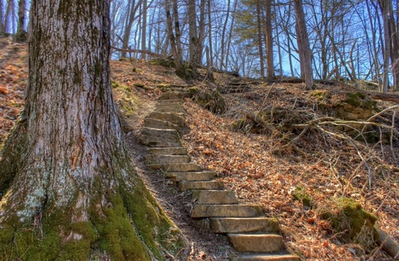 steps up the hill at maquoketa caves state park iowa