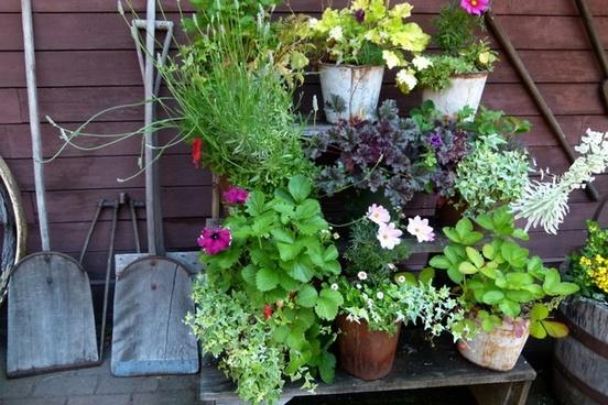 still life garden