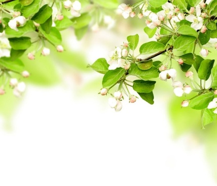 stock photo of spring background hd picture
