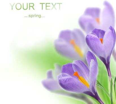 stock photo of spring flowers 02 hd picture