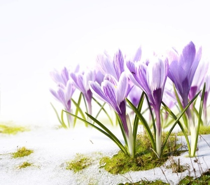 stock photo of spring flowers 03 hd picture