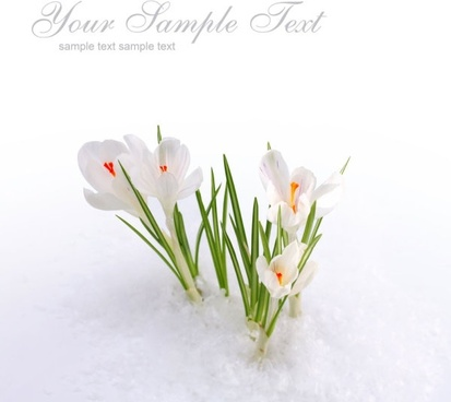 stock photo of spring flowers 04 hd pictures