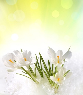stock photo of spring flowers 05 hd pictures