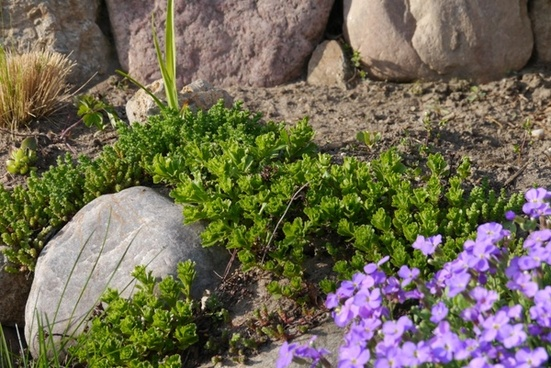stone garden stones green plant