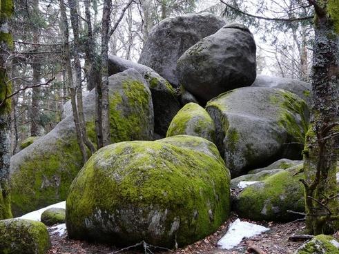 stone woodland nature