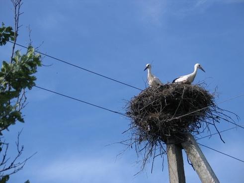 stork jack birds