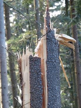 storm damage tree damage canceled
