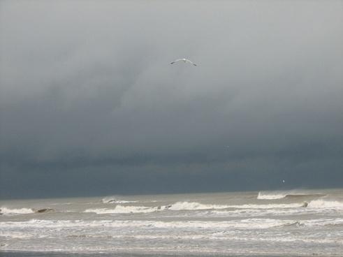 stormy skies ocean seagull