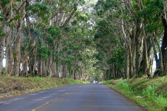 straight road through trees