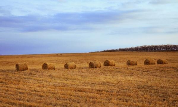 straw in the field