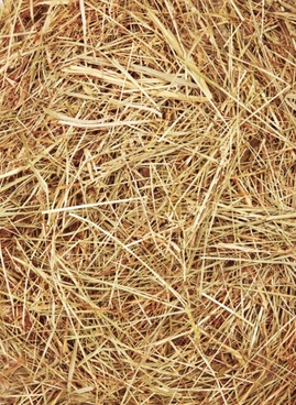 straw photo 04 hd picture