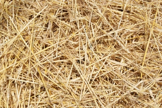 straw picture 02 hd pictures