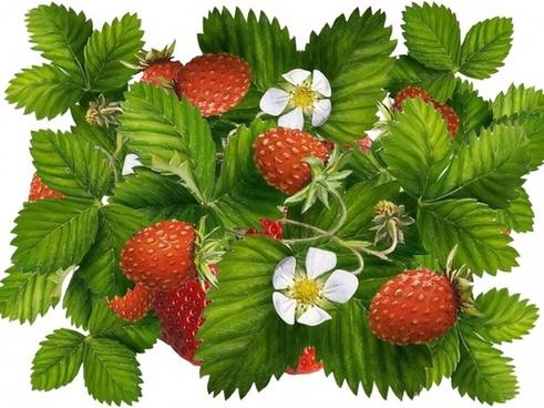 strawberries green leaves