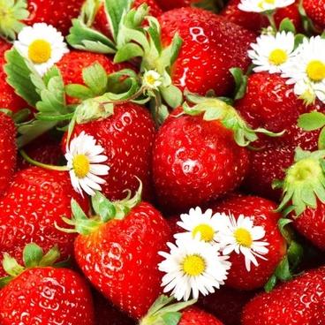 strawberry photo 04 hd picture